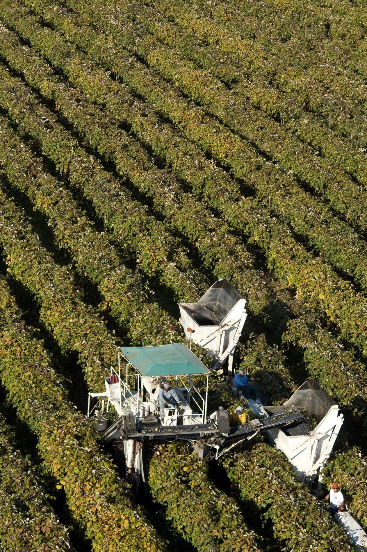Wine Harvest from the Air