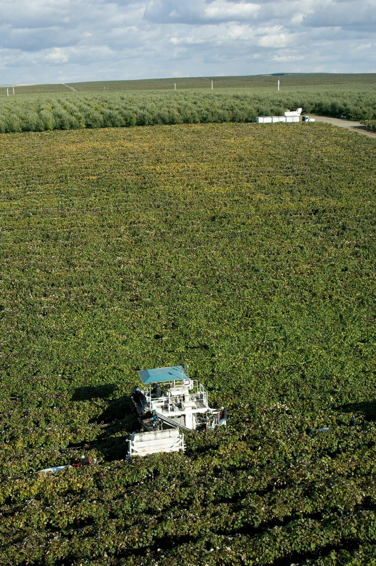 DSC_0370_harvest_aerial