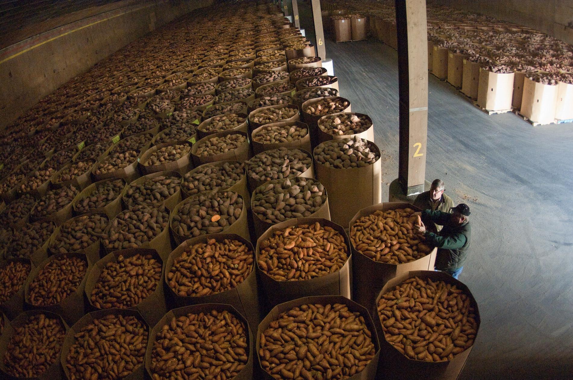 Farmers Talk in Storage