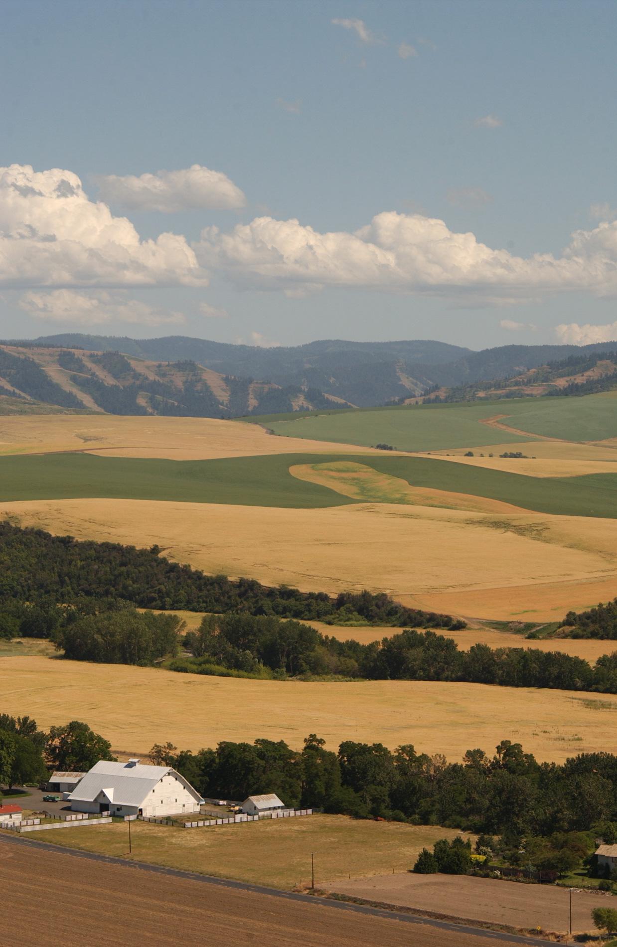 The foothills of Walla Walla