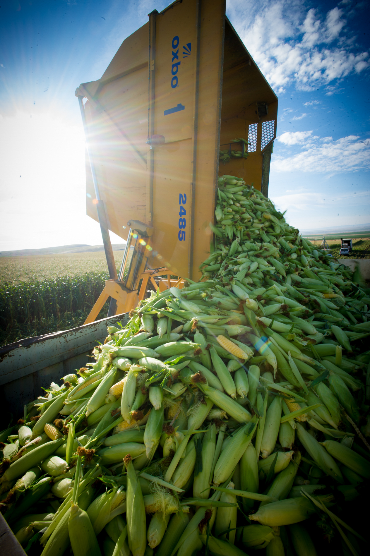 Dumping Corn
