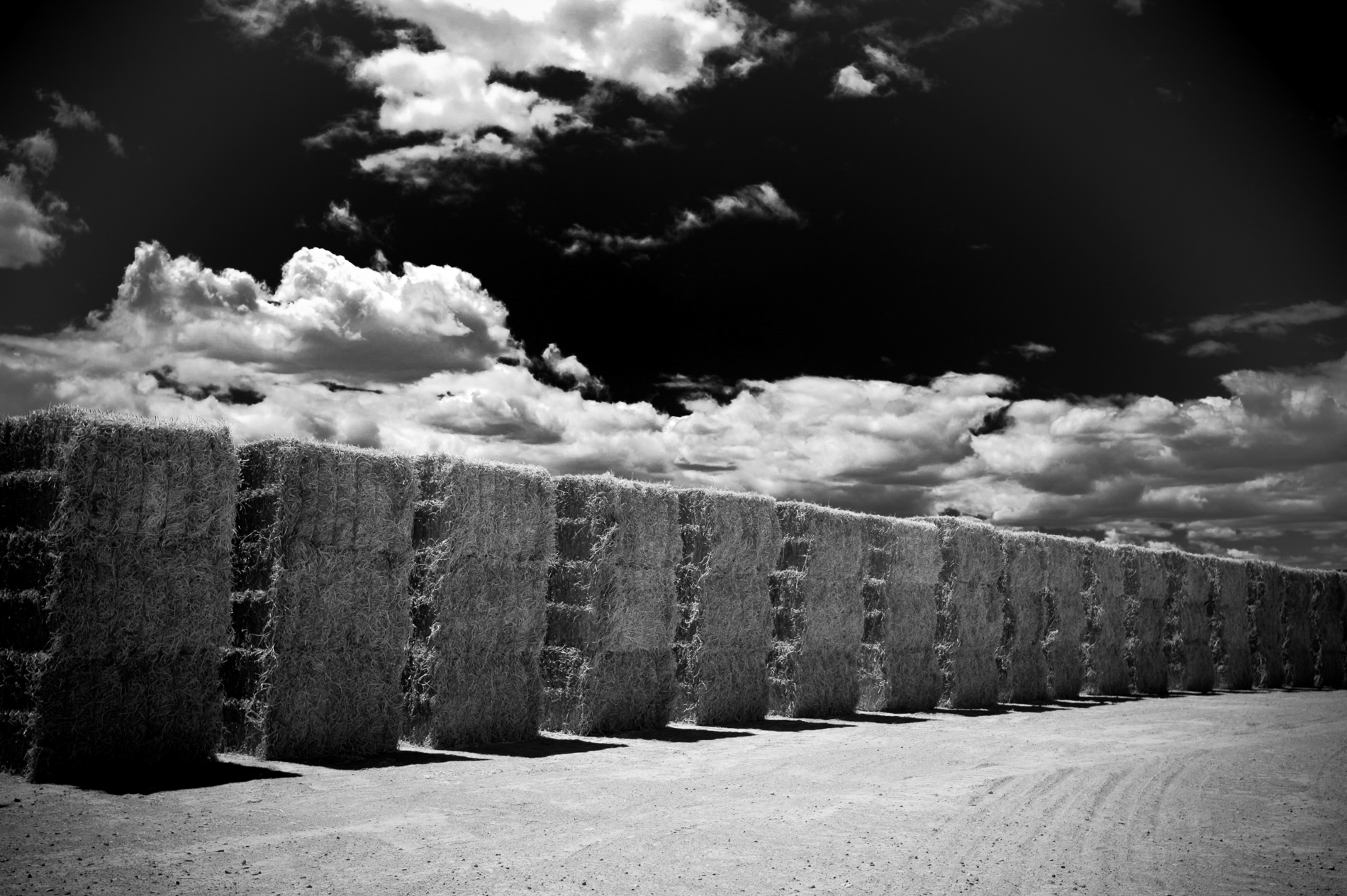 Black and White Hay