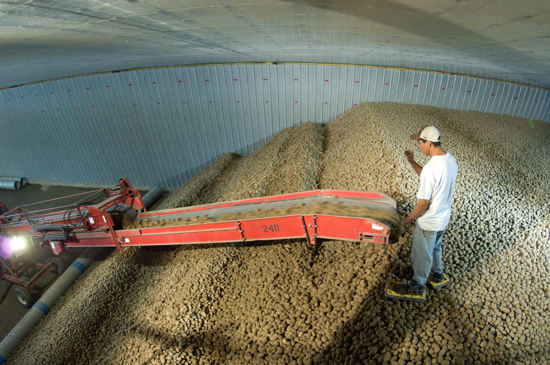 Potato Storage Worker