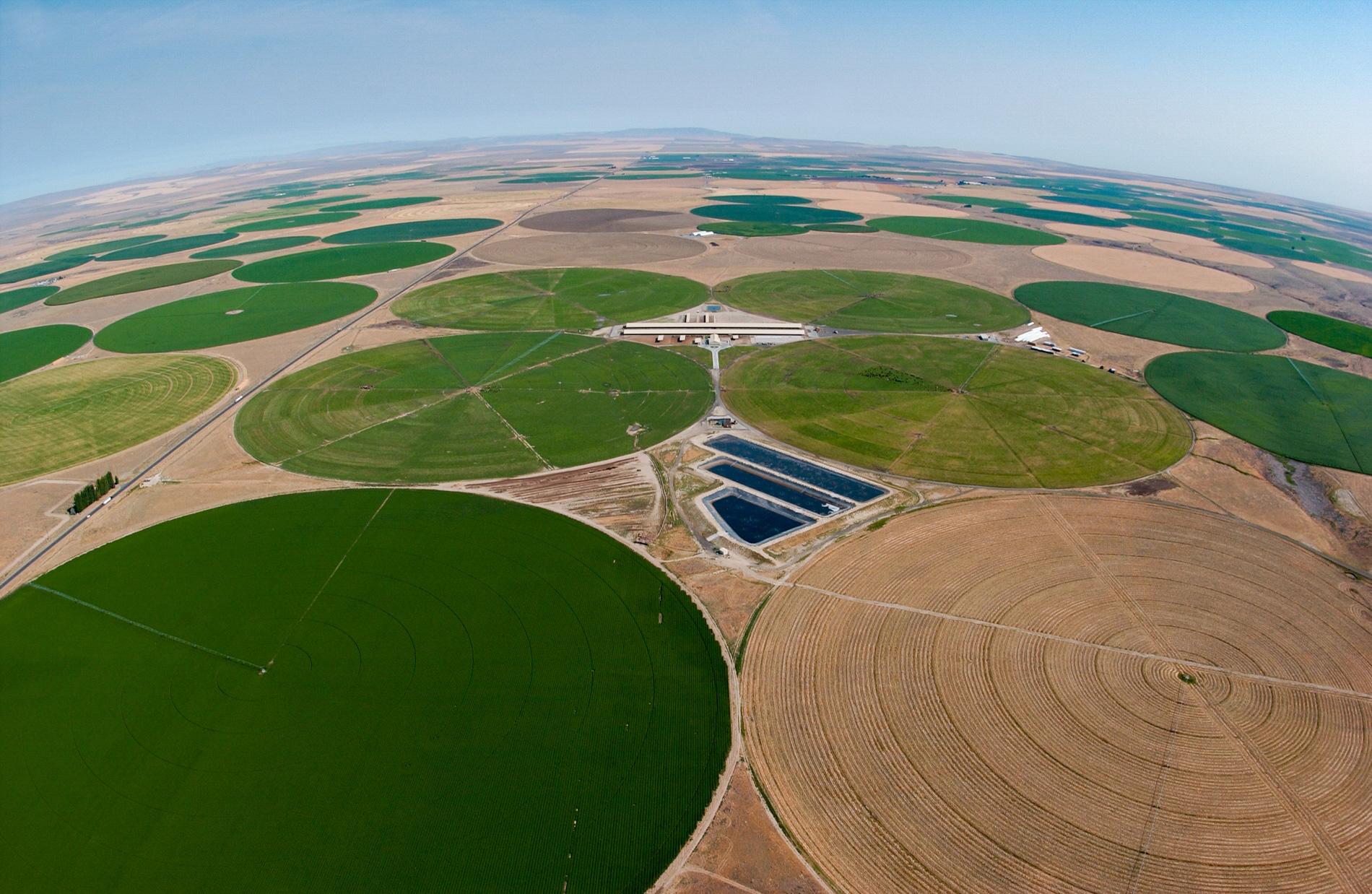 A Dairy in Between Crop Circles