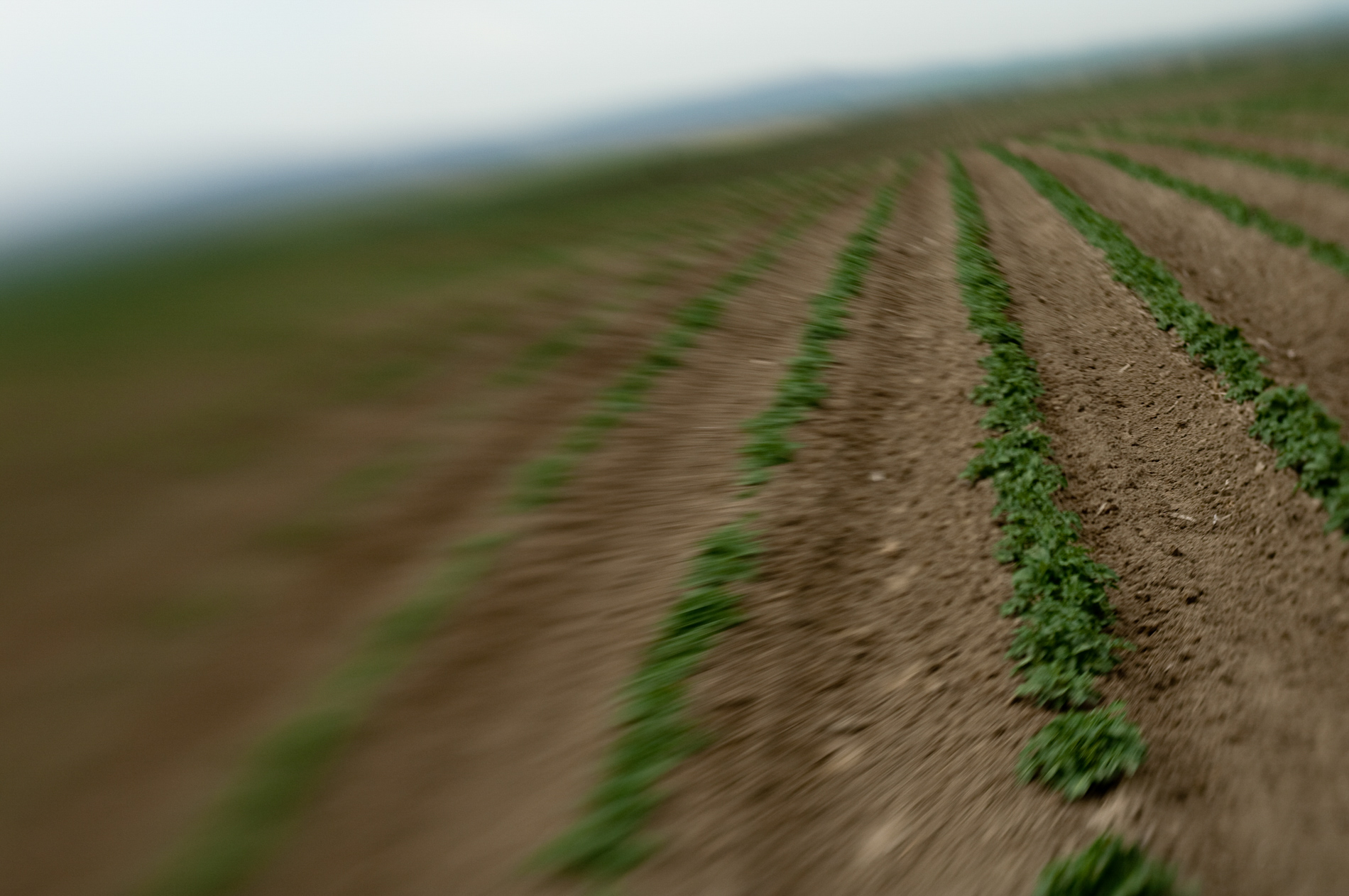 Potatoes on Tilt