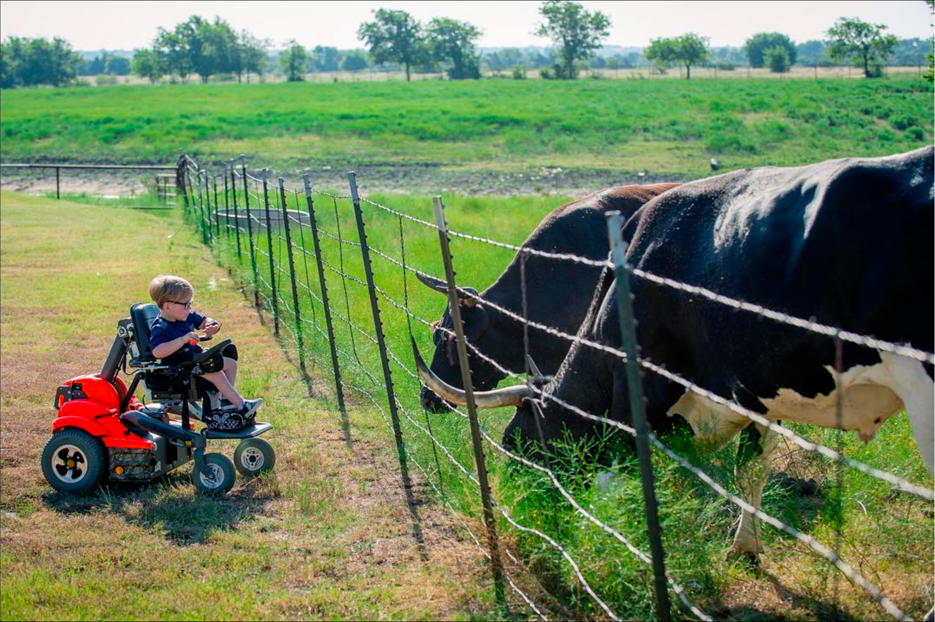 Able and the Cattle