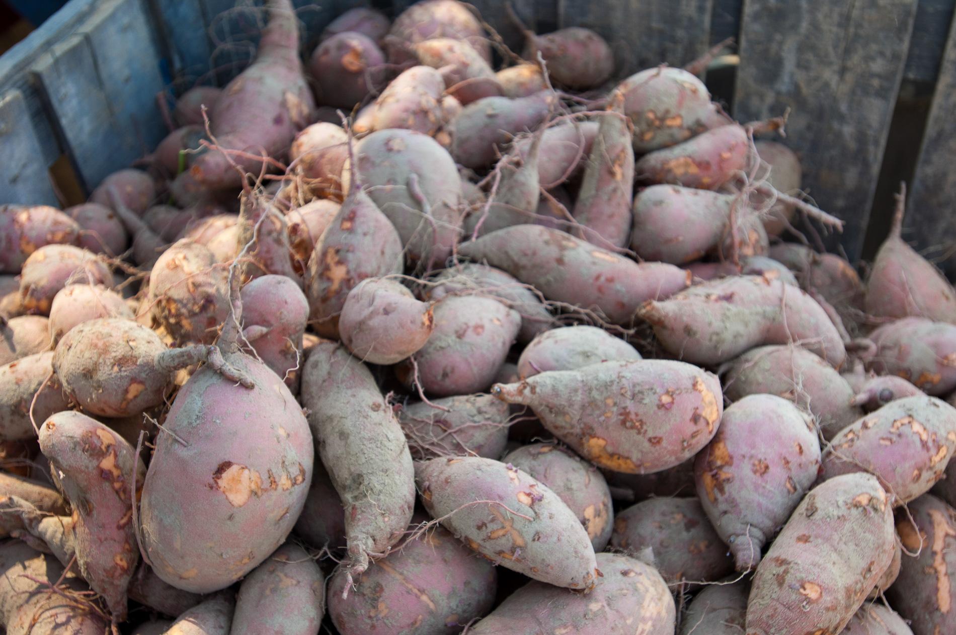 Sweet Potato Still Life