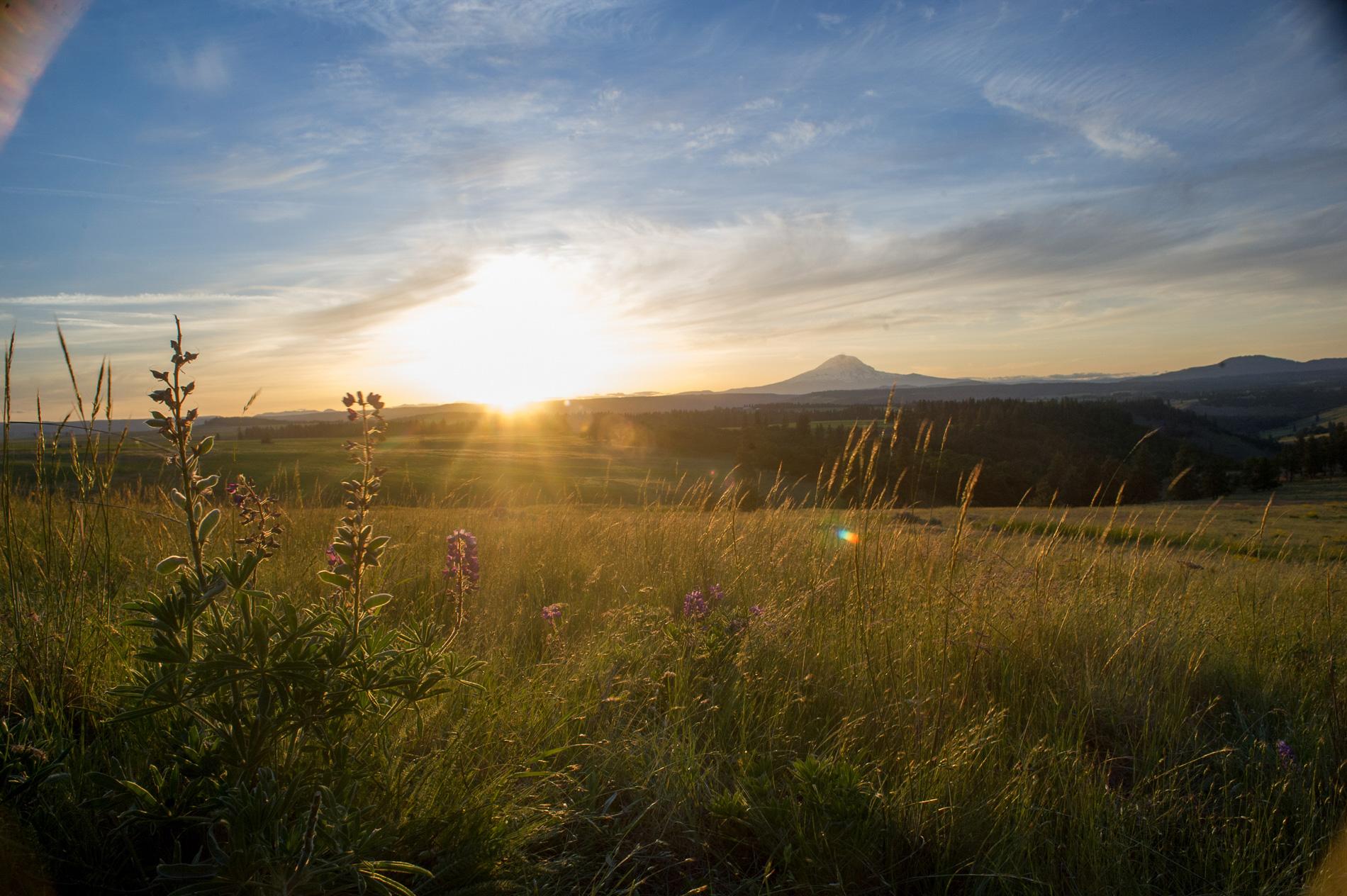 Mount Adams at Sunset