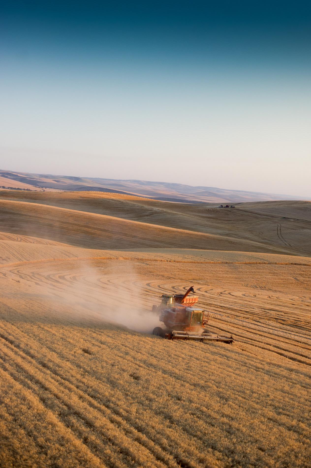 Wheat Harvest in Walla Walla