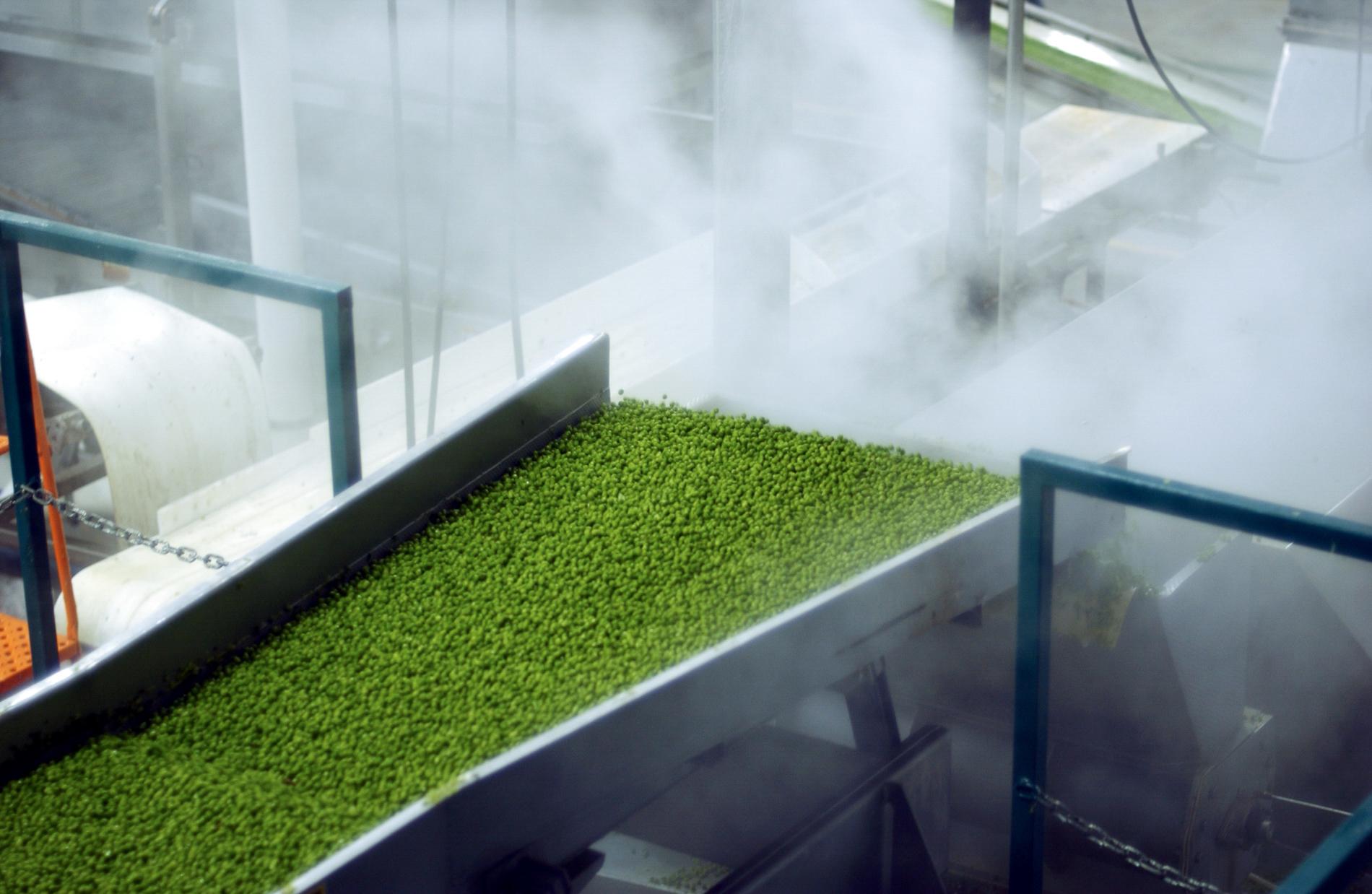 Pea Production